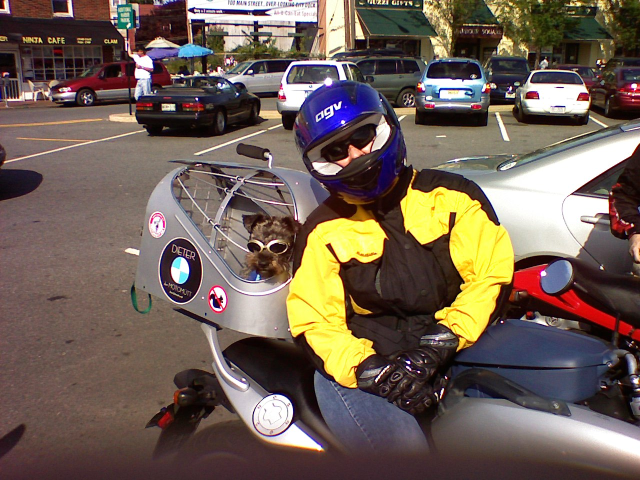 157522d1207667708-dogs-bikes-0818071628.jpg